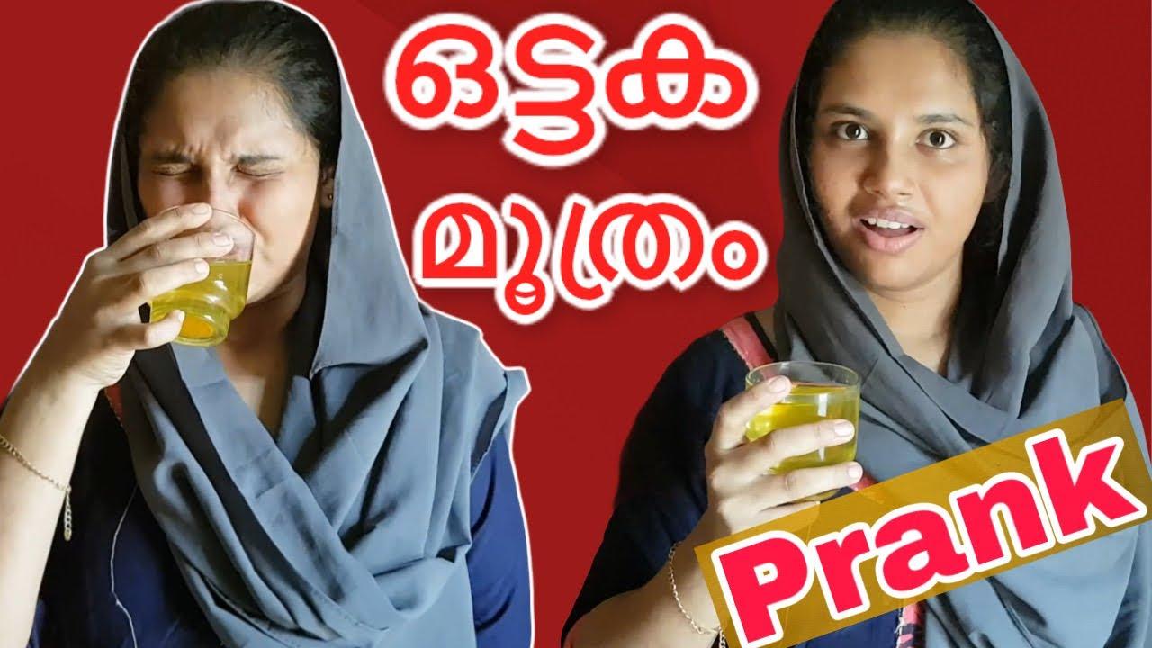 അറബി അയച്ചു തന്ന ഒട്ടക മൂത്രം| Prank On Wife ?| Malayalam Prank New episode