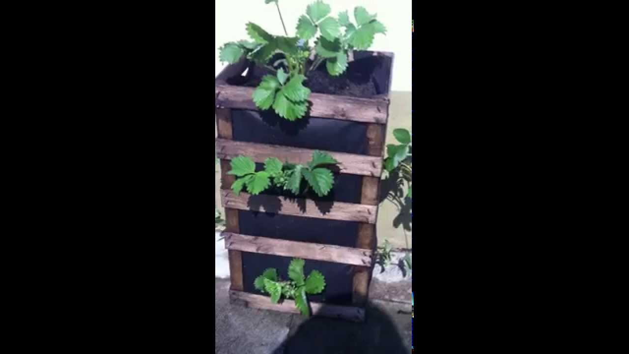 tipps f r erdbeeren am balkon oder terrasse erdbeeren pflanzen youtube. Black Bedroom Furniture Sets. Home Design Ideas