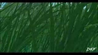 Samurai 7 - Trailer