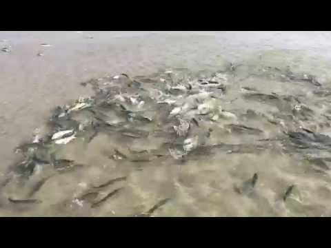 Bluefish Blitz 2015