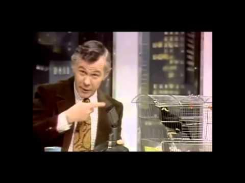 mynah talking bird