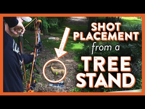 Shot Placement From A Treestand