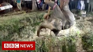 Elephant rescued from deep well in a 14-hour operation - BBC News