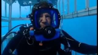 Nadando entre monstruos: el gran tiburón blanco