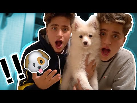 Thumbnail: WE JUST BOUGHT A PUPPY **not clickbait**