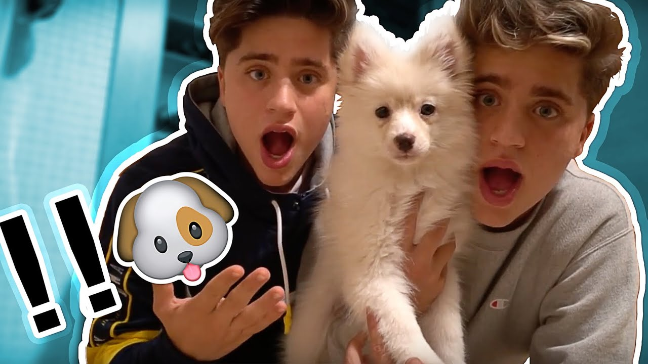 we-just-bought-a-puppy-not-clickbait