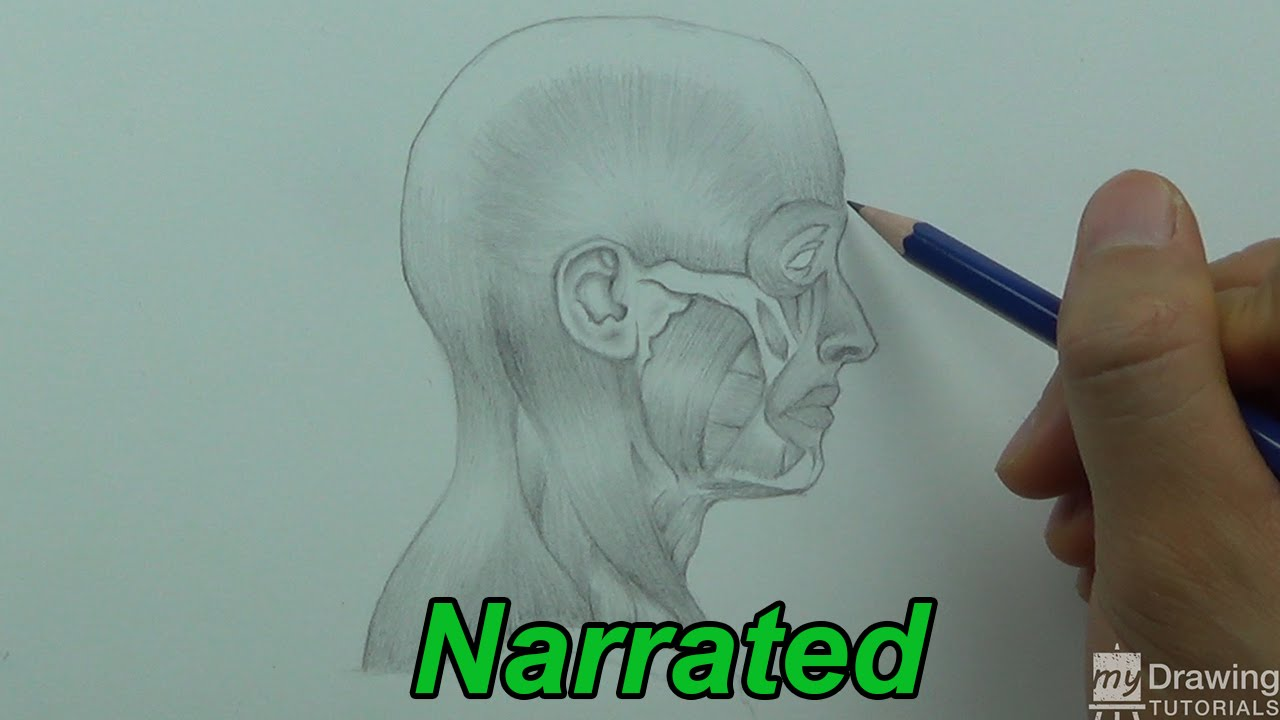 How To Draw The Human Head Anatomy Drawing Narrated Youtube