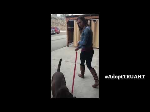 Animal Health Technology Pet Adoptions - Thompson Rivers University