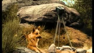 Rin Tin Tin 29 El fotografo