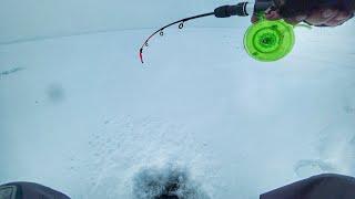 Проверил судаковую точку! Зимняя рыбалка 2020. Ловля судака на тюльку.