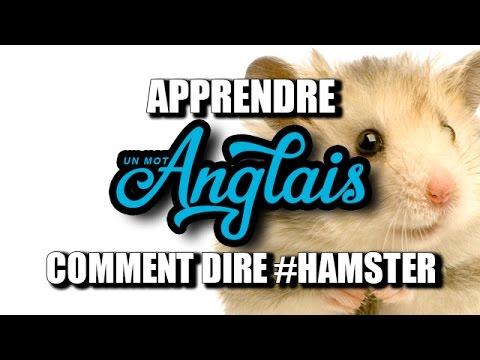 Apprendre Un Mot Anglais Comment Dire Hamster Youtube