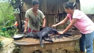 Slaughtering Goat For Dinner