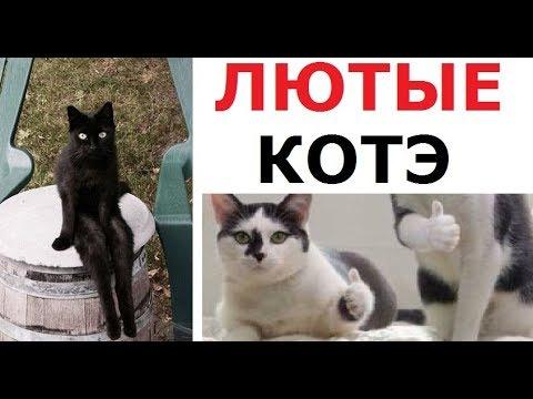 Лютые коты. Коты-люди и коты с крутыми рисунками на теле!