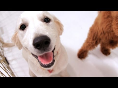 How to Get Your Puppy to Obey You | Puppy Care