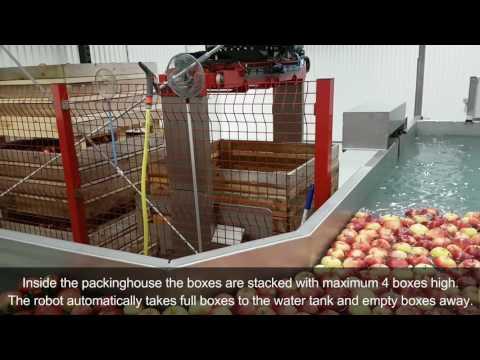Packing / Sorting apples at Daniels Frukt, Åland Finland