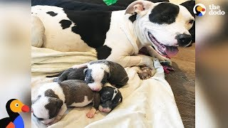 Dog Mom Rescues Orphaned Puppies Found In A Box | The Dodo
