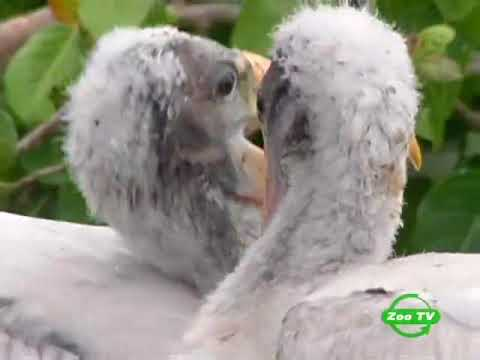 BBC Мир природы  Мамы и детеныши - Познавательные и прикольные видеоролики