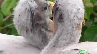 BBC Мир природы  Мамы и детеныши