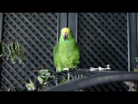 10.September 2012 Ein bißchen Papageien Gymnastik
