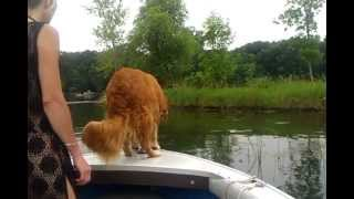 Dog Jumps Off Moving Boat