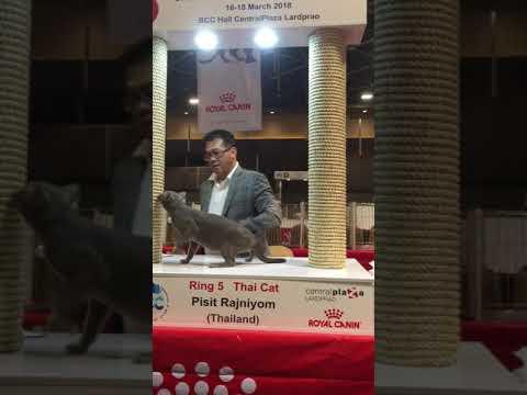ประกวดแมว CFA International Cat Show 2018