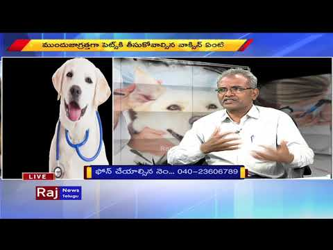How To Take Care Of Pet Dogs And Protect Tips | Raj News Telugu