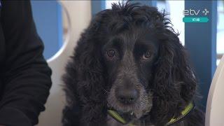Четвероногие таможенники: собаки на страже аэропорта