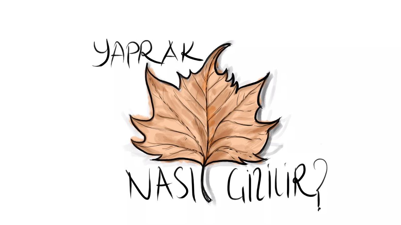 Yaprak Nasil Cizilir Anlatimli Yaprak Cizimi Leaf Drawing For