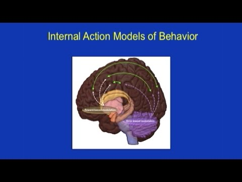 Motor and Social Skill Function: Connecting Learning and Brain Function in Autism