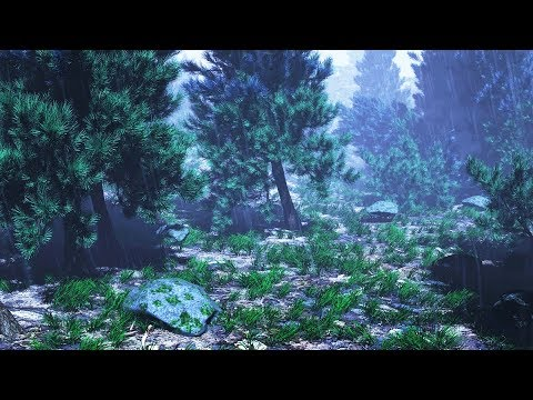 Rain Sounds In Woods For Sleeping Or Studying | Rainstorm White Noise 10 Hours