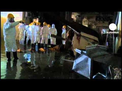 Clean up at Fukushima halted