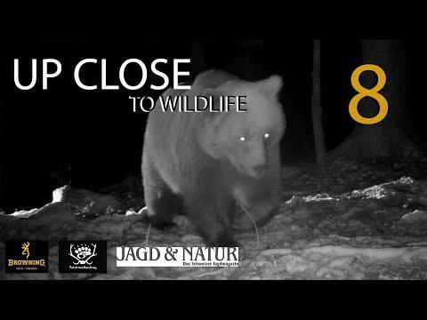 UP CLOSE TO WILDLIFE 8: Leben in der Nacht | Wildlife at nighttime