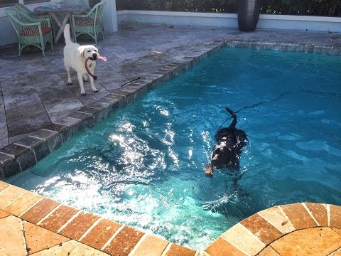 Extreme Phobia, fear of swimming - Dog Rehabilitation