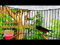 Kolibri Ninja Konin Gacor Mewah Nembak Isian Cocok Untuk Masteran  Mp3 - Mp4 Download