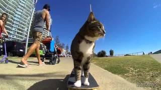 Кот на скейте