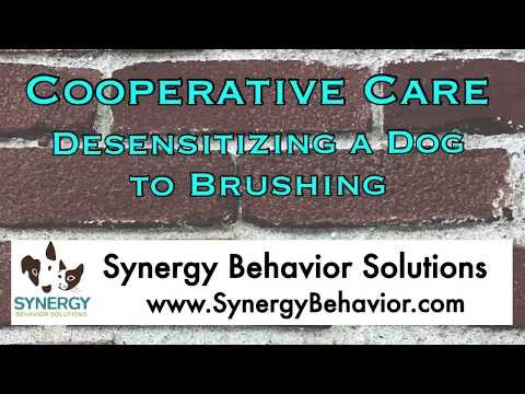 Cooperative Care for Dogs - Desensitizing a Dog to Brushing