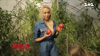Що вирощуютьна своєму городі Оля Полякова, Віктор Бронюк та Денис Берінчик