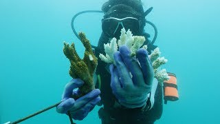 How Corals Hold Centuries of Ocean Climate Data