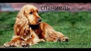 Какая ты порода собак по знаку зодиака