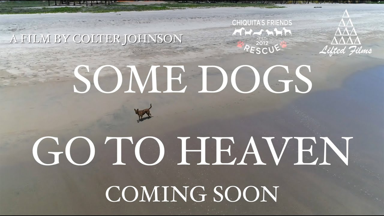 Image result for some dogs go to heaven Chiquita's Friends