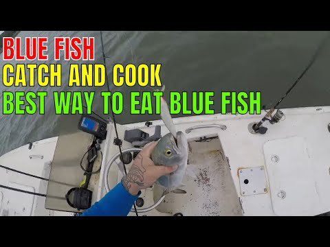 THE BEST WAY TO EAT BLUE FISH..BLUE FISH CATCH CLEAN AND COOK