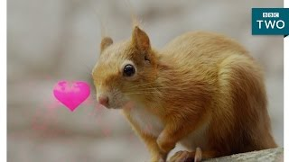 Squirrels in love - Wild Tales from the Village - BBC Two