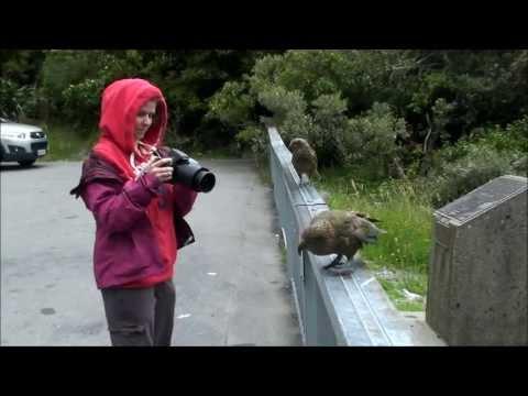 зеландия знакомства