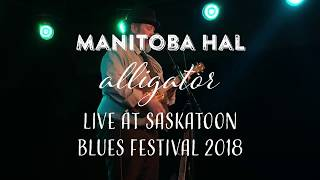 Alligator LIVE at Saskatoon Blues Festival 2018