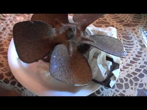 Cleaning the NuTone Kitchen Exhaust Fan Part 1