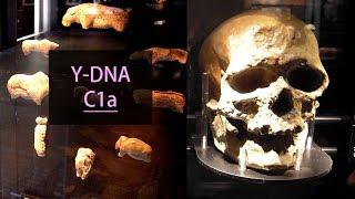 クロマニョン人と日本人の共通DNA