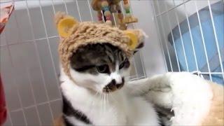 新しい色のひつじも気に入らなかったどろぼう猫。 となると今回も…(笑)