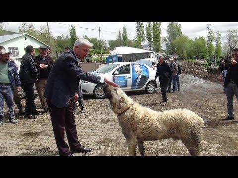 Vekil Adayının Seçim Ziyaretinde Kangal Sürprizi