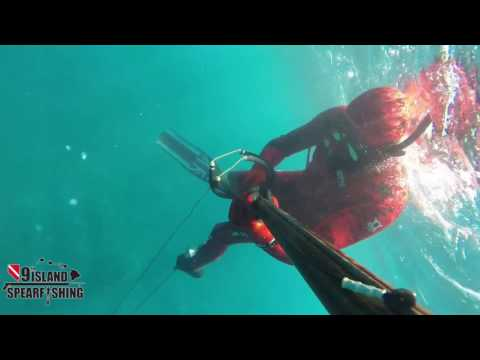 Spearfishing Hilo