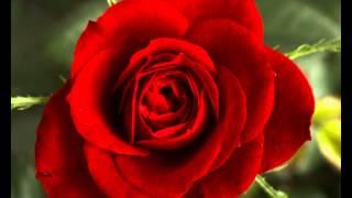 บัญชารัก--ศรัณย่า ส่งเสริมสวัสดิ์
